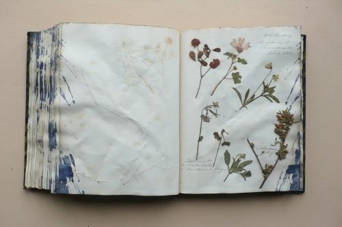 valkenburg herbarium