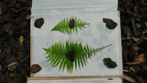 Herbarium Oostende