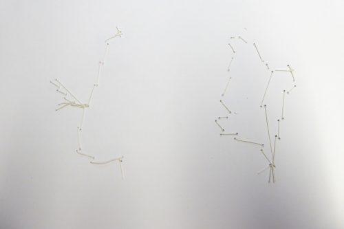 detail-herbarium